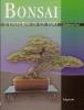 Bonsai: l'universo in vaso