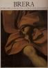 Brera storia della pinacoteca e delle sue collezioni
