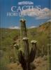 Cactus fiori del deserto